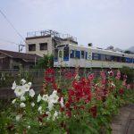 20160601 МR電車・タチアオイ