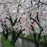 1492575793923 愛知県五条川