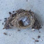 巣破壊 (1)