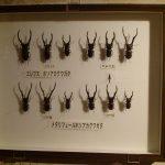 20170722 昆虫展Ⅱ (5)