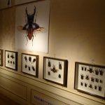 20170722 昆虫展Ⅱ (3)