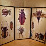 20170722 昆虫展Ⅱ (8)