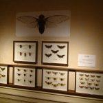 20170722 昆虫展Ⅱ (2)